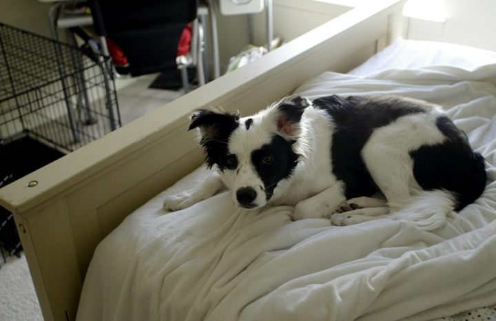 Lucy Belle in the Bed // Erin Parker, Hattiesburg Pet Photographer